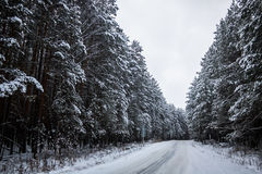 Winter road in snowy forest landscape. Photo Stock Images
