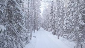 Winter road in the snowy forest. Moving the camera forward stock video