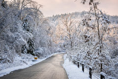 Winter road in snowy forest Royalty Free Stock Images