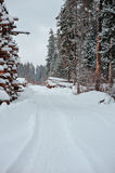 Winter road in snowy forest with tree felling Stock Images