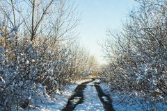 Winter road in a snowy forest among trees on a sunny day. Winter road in a snowy forest among trees on a sunny day Stock Photos