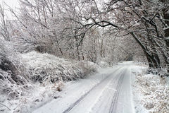 Winter road in snowy forest. Royalty Free Stock Photography