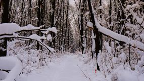winter road in a snowy forest royalty free stock photography