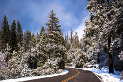 Winter road through snowy forest. stock photo