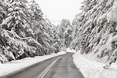 Winter road with snowy trees Stock Photography