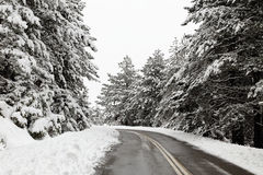 Winter road with snowy trees Royalty Free Stock Photos