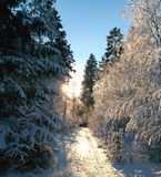 Winter road in sun royalty free stock photography