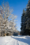 Winter road. Surrounded by trees in countryside Stock Photos