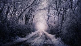 Winter road surrounded by trees. During freezing day royalty free stock images