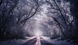 Winter road surrounded by trees. During freezing day Royalty Free Stock Image