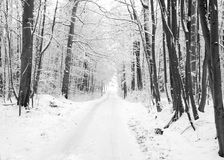 Winter road to wood. Stock Photos