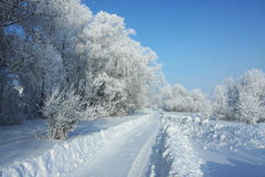 Winter road to wood. Frosty sunny day in Western Siberia Stock Photos