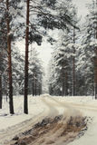 Winter road to a  wood. Winter road to a coniferous wood Stock Photo
