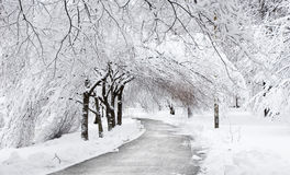Winter Road Under The Trees Stock Images