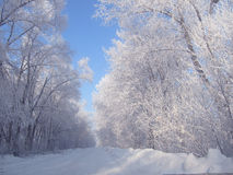 Winter road in the village Stock Photography