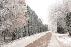 Winter and road Stock Photos