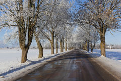 Winter road. Wet winter road in countryside Stock Photography