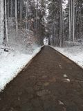 Winter road in the wood stock image