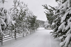 Winter road with a wooden fence and fir trees on both sides of the road. Stock Image