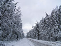 Winter road. Through the winter woods Stock Photo