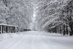 Winter road through the woods Royalty Free Stock Images