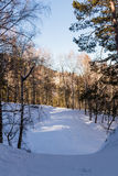 Winter road in the woods Stock Photography