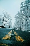Winter road at yellow lines. A photo of a paved road in the winter time where the snow on the road has melted but the snow still remains on the trees.  This is a Royalty Free Stock Image