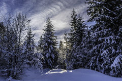 Winter. In Romania, Mures, Deda Royalty Free Stock Photo