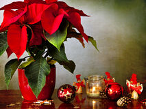 Winter rose, candle and Christmas decorations. Preparing Christmas: a beautiful poinsettia in a red vase on a wooden table with a candle in glass, Christmas Stock Image