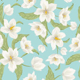 Winter rose hellebore flowers pattern light blue Royalty Free Stock Image