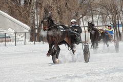 Winter. Running is a test of trotters. Competitions in equestrian sport in the winter. Reportage. Running is the test of horses of trotting horses and speed in Stock Photography