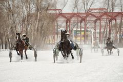 Winter. Running is a test of trotters. Competitions in equestrian sport in the winter. Reportage. Runs - test the horses of trotting breeds for speed in the Royalty Free Stock Photo