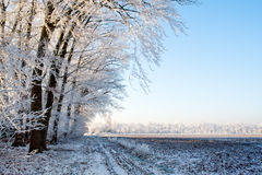 Winter rural Stock Images