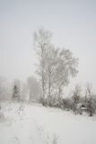 Winter, rural foggy landscape Royalty Free Stock Image