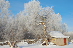 Winter rural landscape Royalty Free Stock Photography