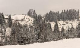 Winter rural landscape. In the Carpathian mountains Stock Images