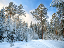 Winter rural landscape with the forest and the blue sky Royalty Free Stock Photo