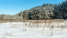 Winter rural landscape Stock Photo