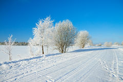 Winter  rural landscape with the road the forest and the blue sk Stock Photos