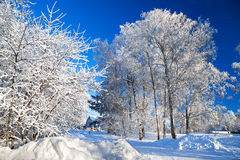 Winter rural landscape Royalty Free Stock Image