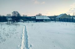 Free Winter Rural Landscape. Snowfall, Trees, High Dry Grass. Royalty Free Stock Photos - 110363718