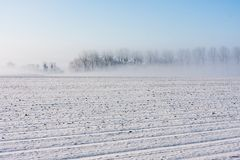 Winter in rural landscape with trees and fog Stock Image