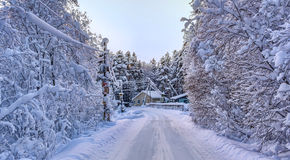 Winter rural road and trees in snow Stock Photos