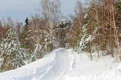 Winter rural road. Through the snow-covered forest Stock Photos
