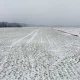Winter rural scene with fog and white fields Stock Photos