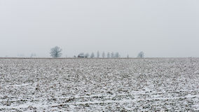 Winter rural scene with fog and white fields Royalty Free Stock Photo