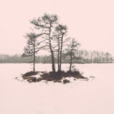 Winter rural scene with fog and white fields - retro vintage eff Royalty Free Stock Photography