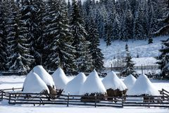 Winter rural scene. Snow covered haystacks Royalty Free Stock Images