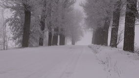 Winter rural snowy road with alley old trees and  magic fog stock footage