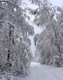 Winter in Russia. Along the side of a dirt road the trees are covered with snow Royalty Free Stock Photography